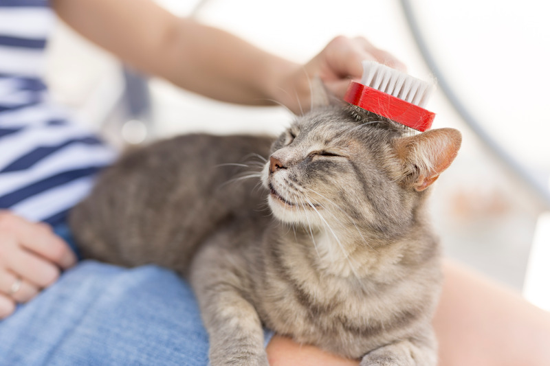 Comment entretenir le pelage de son chat ?