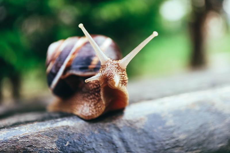 Les avantages de la bave d'escargot